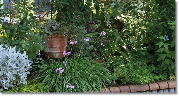 南面花壇 2