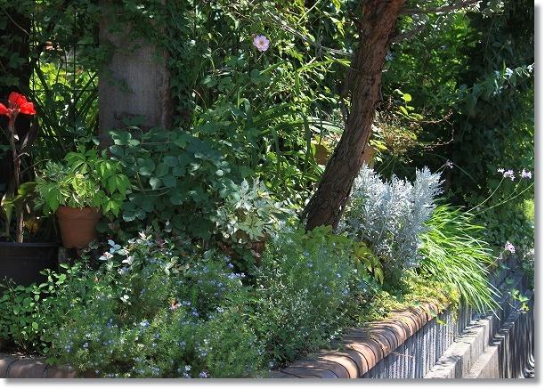 門前花壇 1