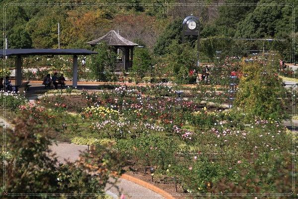 花フェスタ記念公園 3