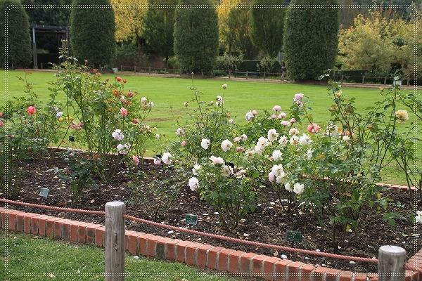 New Roses Garden