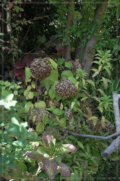 ターシャの庭 2