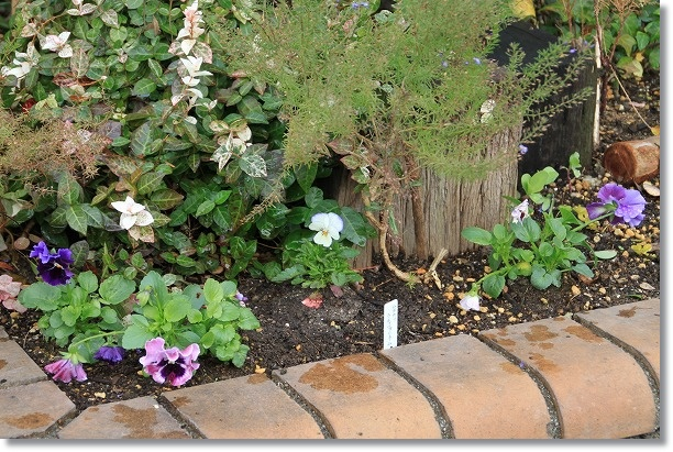 門前花壇 2