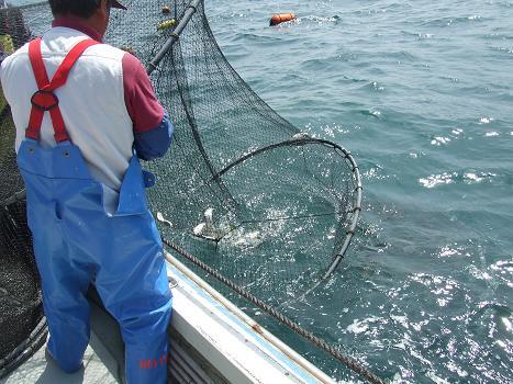 2012ひと網モニター漁の途中