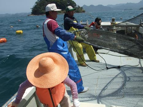 2012ひと網モニター漁開始
