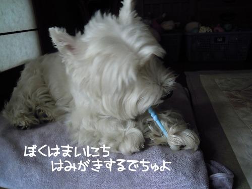 りゅんの歯磨き