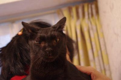 おおさか26匹猫レスキュー
