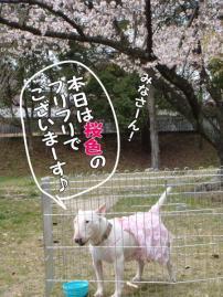 ピンクのフリフリ花ちゃん