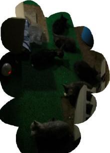 天才なるおさなご達 ~我輩は書生猫である~-6ニャッコ達・・・