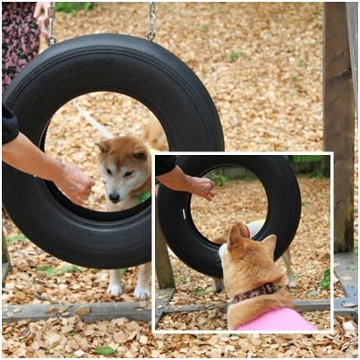 page 柴犬オフ会 ドッグラン