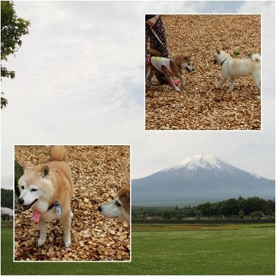 page 日和 柴犬オフ会3