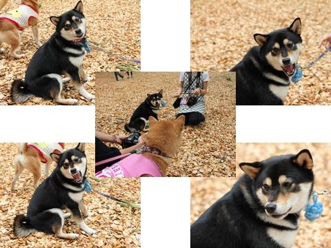 page 柴犬クラブオフ会 7