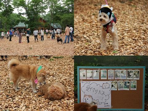 page 柴犬クラブオフ会 8