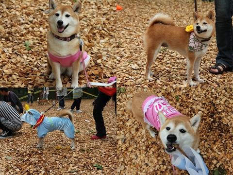 page 柴犬クラブオフ会11