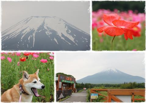 page 日和 花の都公園にて