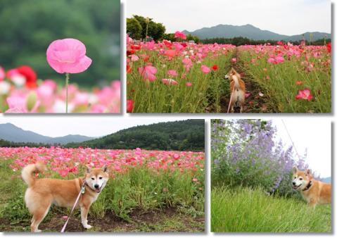 page 日和 花の都公園にて2