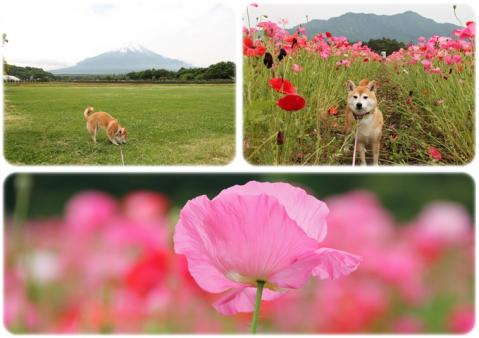 page 日和 花の都公園にて3
