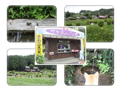 page 日和 柳生花菖蒲園3