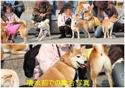 page 大阪城柴犬オフ会