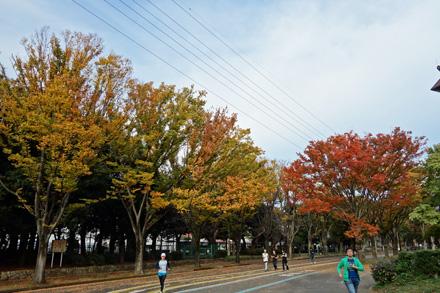 公園ケヤキ