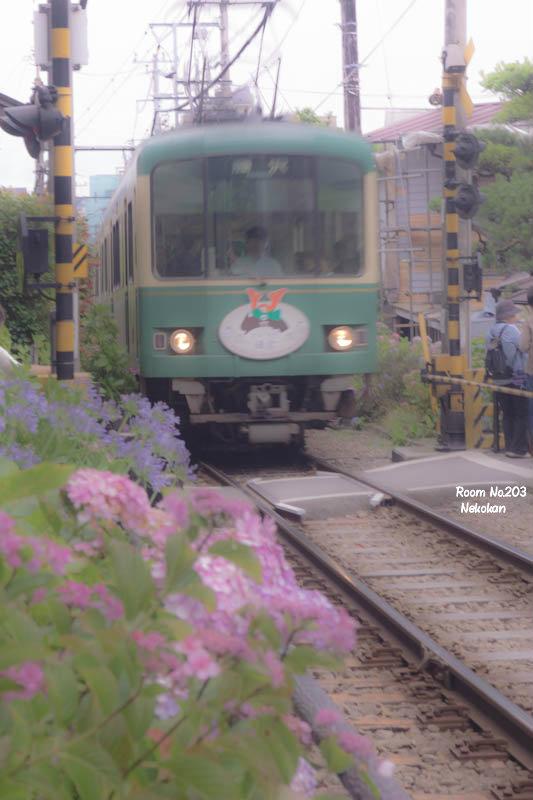 紫陽花電車1a