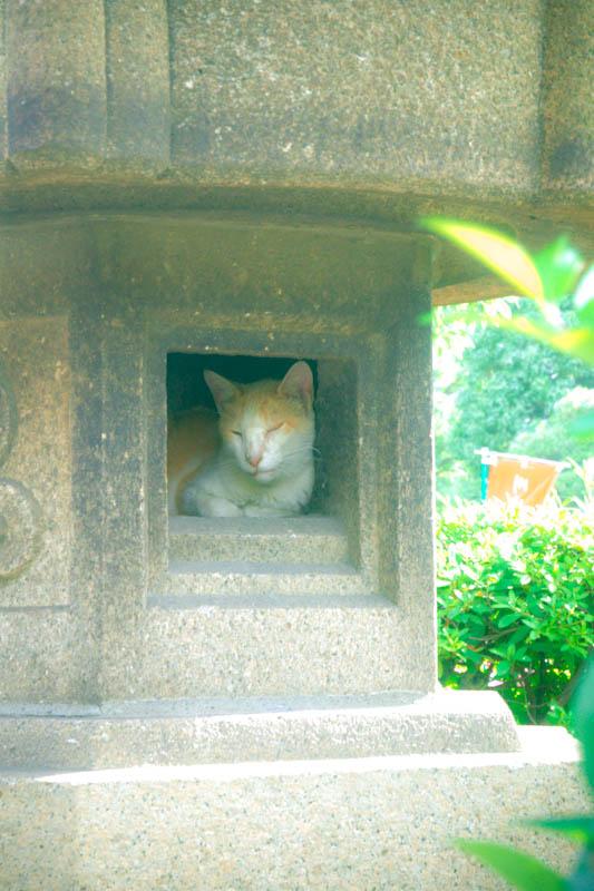 川崎大師ネコ