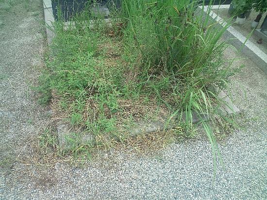 H22年7月15日 裏側 墓地