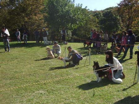 2012・11・4運動会中・大型犬スタート