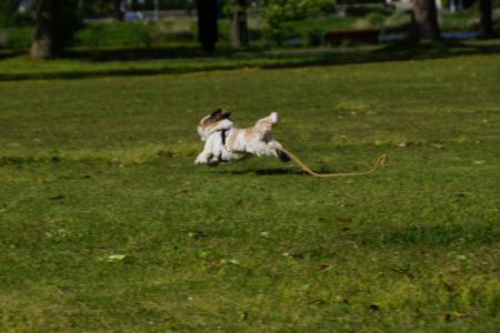 走る獅子丸