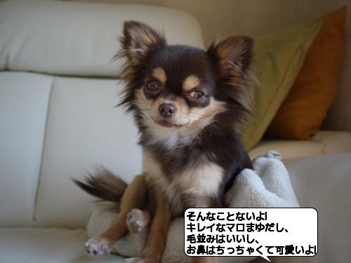 20110301_172550.jpg