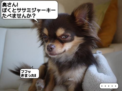 20110301_173324.jpg