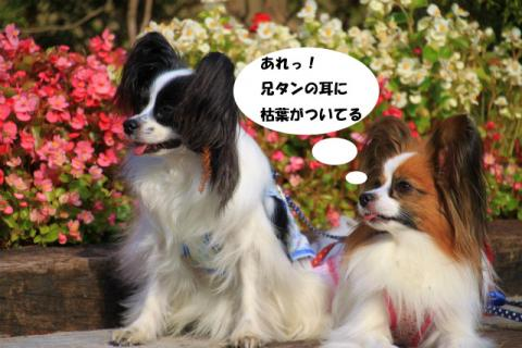 IMG_8435kareha1.jpg