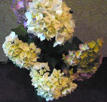 ハート温暖化♪-紫陽花