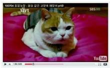 ハート温暖化♪-解脱ネコ☆