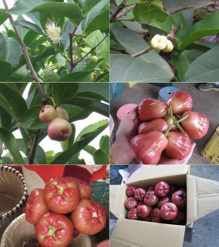 果物2450