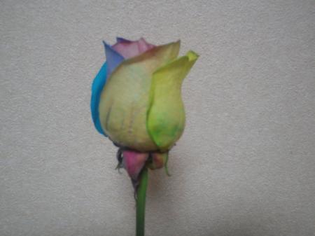 PAP_0113_convert_20110618220521.jpg