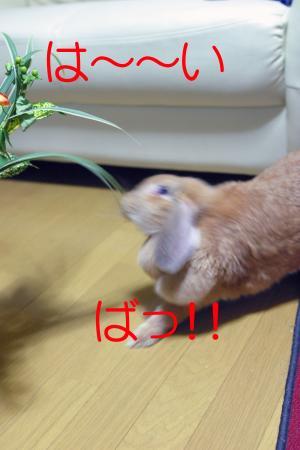 IMG_0002_convert_20100801054202.jpg