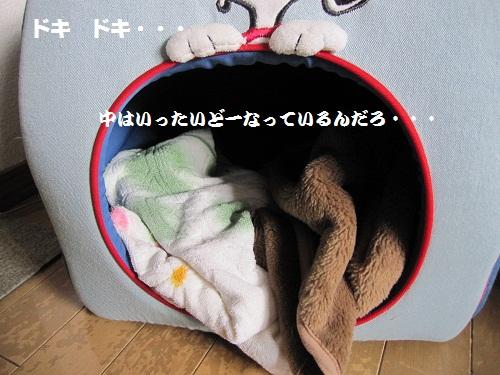 006-2_20120205222220.jpg