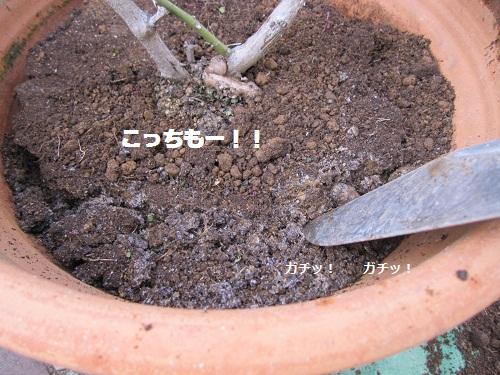 008-2_20120129192737.jpg