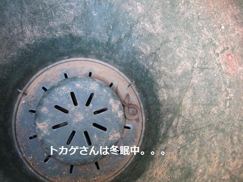 011-2_20120129192929.jpg