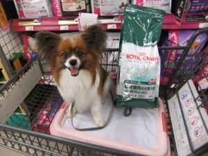 肥満傾向の小型犬用