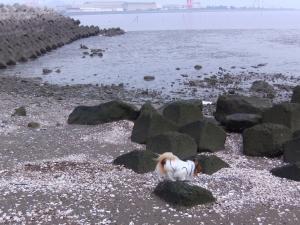 海くんくん