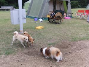 キャンプ場のわんこ