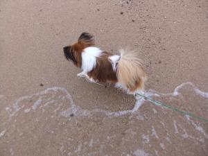 波から逃げるらぶ