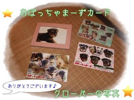 記念カード