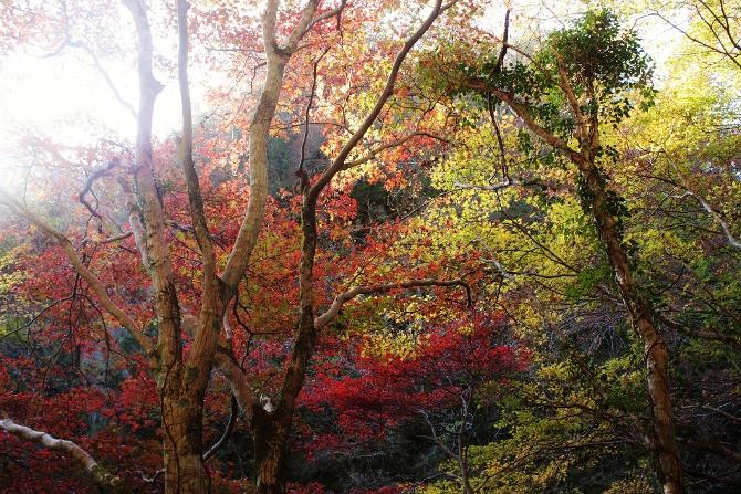 紅葉まぶしい帝釈峡