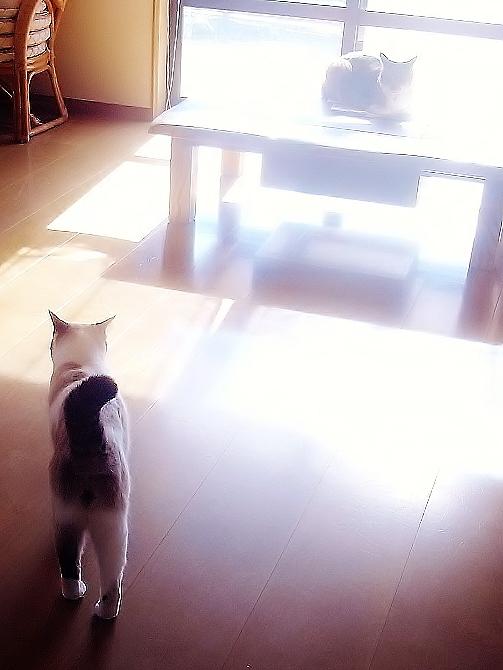 猫どもはマイペース