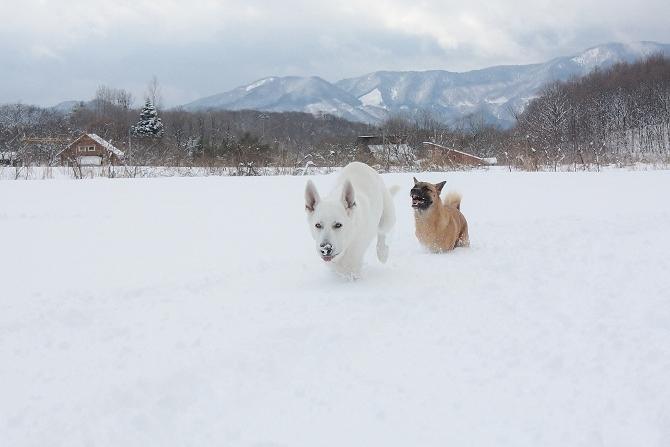 また雪遊びしたい