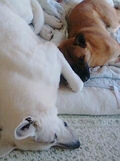 テータラ昼寝ちゅう