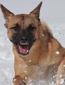雑種犬 タランティーノ