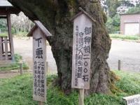 世良田東照宮の桜 2
